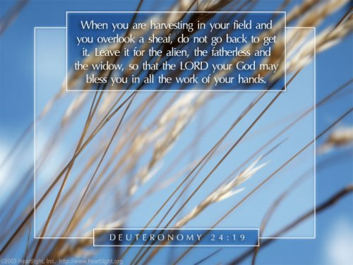 Bible Verse of the Day - Page 11 Deuteronomy24_19